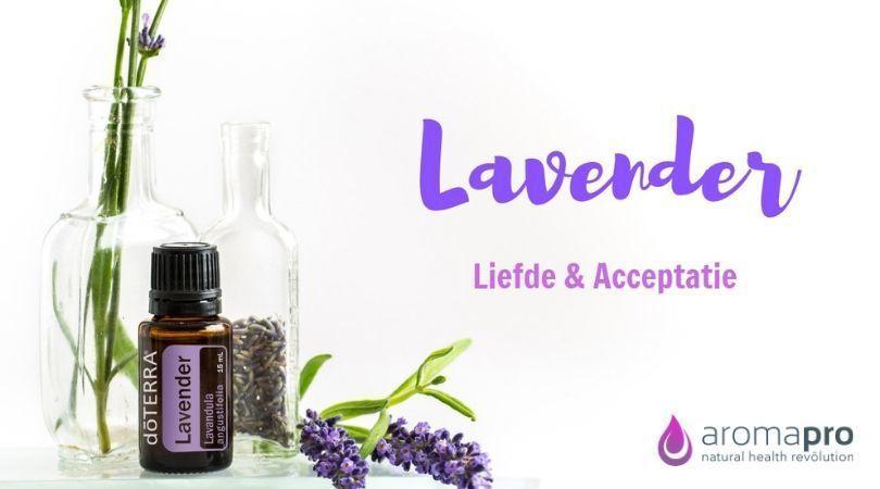 Lavendel von doTERRA